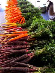 Heirloom carrots - beautiful