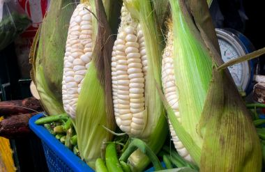 Cobs of Peruvian corn