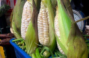 Cobs of Peruvian corn